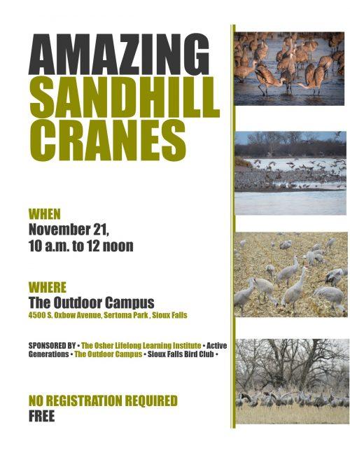 Amazing Sandhill Cranes