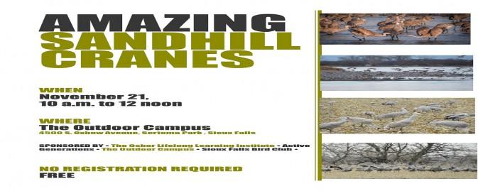 See the Amazing Sandhill Cranes